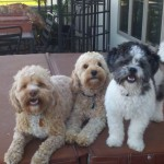 Lucky (middle) with Shandy (left) and cousin Lily (right)